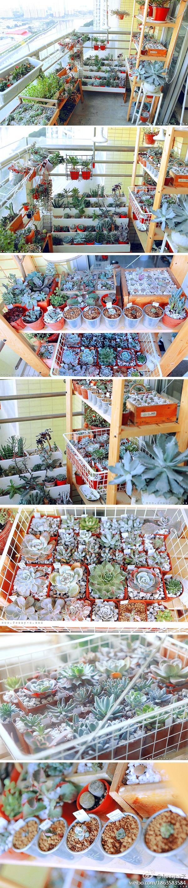Balcony full of succulents!