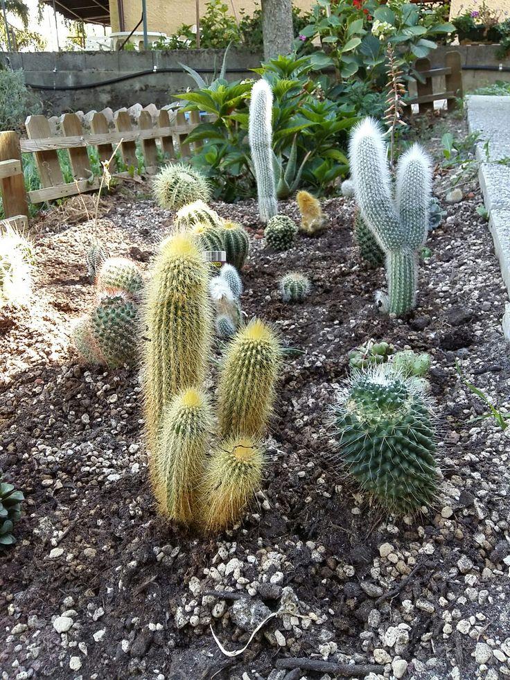 Piante grasse ❤ cactus 🌵mammillaria🌵