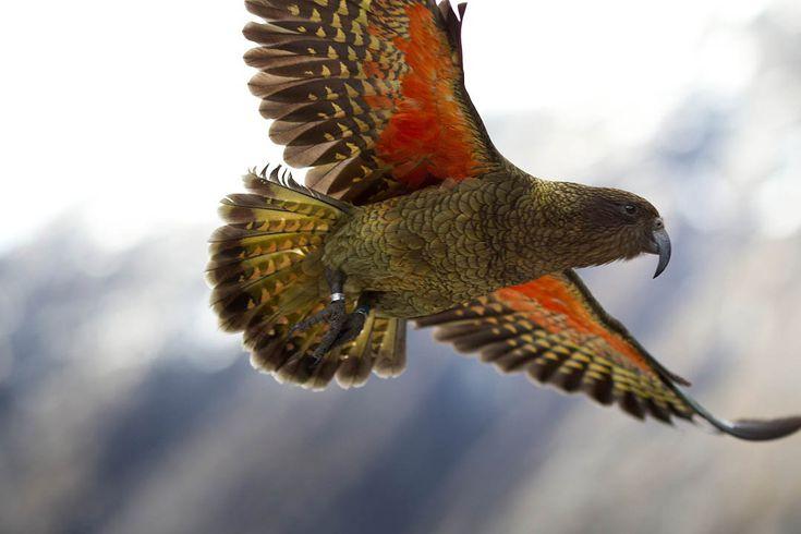 New Zealand bird - What is it?
