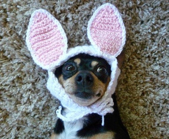 Hase Kaninchen Hund hustet Hund Kostüm Haustier von zxcvvcxz