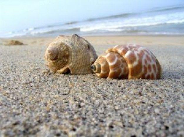 Schelpen op het strand.