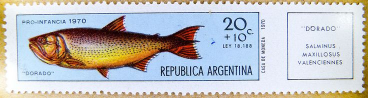 great stamp Argentina 20+10c Dorado (Salminus maxillosus) fish 20 + 10 c timbre-poste Argentine sello selo francobolli Argentina 邮票 阿根廷 Аргенти́на почто́вая ма́рка postimerkki Argentiina γραμματόσημο Αργεντινής 郵便切手 アルゼンチン znaczek pocztowy Argentyna 20c10