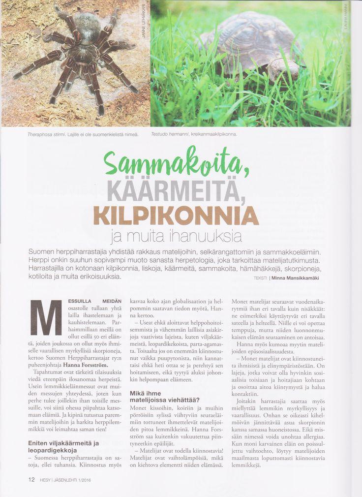 Helsingin Eläinsuojeluyhdistykselle (HESY) lahjoitan osaamistani ja kirjoitan artikkeleita jäsenlehteen.