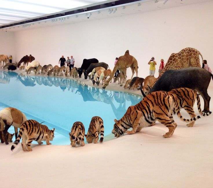 Cai Guo Quiang  exhibition . Brisbane Art Gallery . Australia