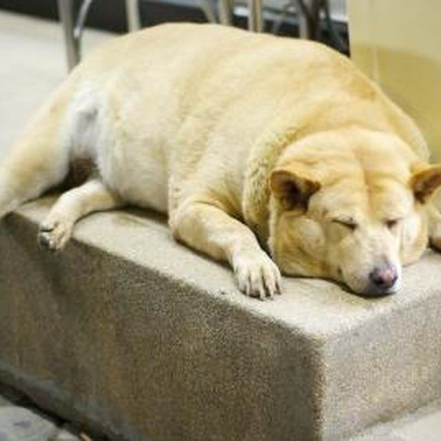 Healthy Dog Food Recipes For Older Dogs