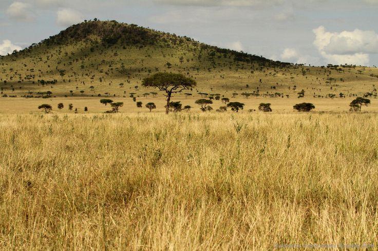 Serengeti National Park, Tanzania #serengetinationalpark #tanzania