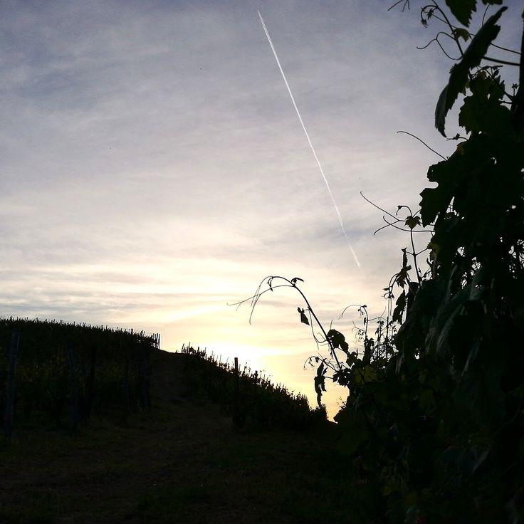 Langa #sunset #vignadelbric #pietro #barberadalba #alice #wine #instalanghetti #ig_piemonte #ig_cuneo #igerslanghe #instawine #langhe #langheunesco #dianodalba #cool #tramonto #loves_united_cuneo #unico