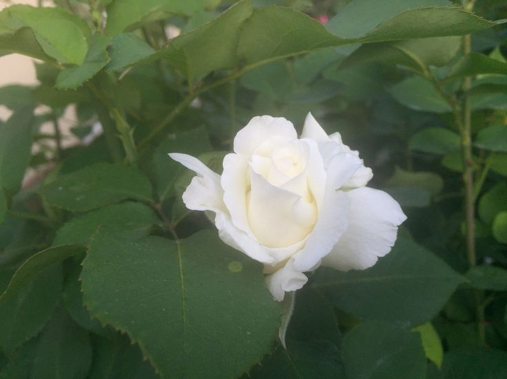 A white one!