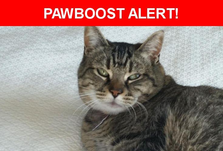 Please spread the word! Samie was last seen in Atlanta, GA 30307.    Nearest Address: Near Aberdeen St NE & Hardee St NE