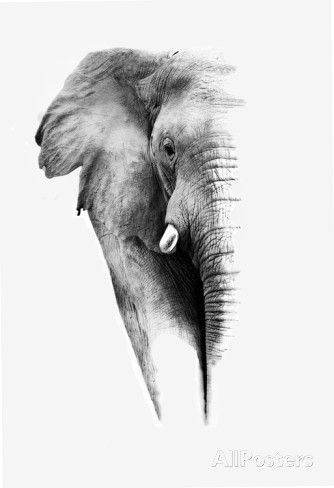 Artistic Black And White Elephant Print by Donvanstaden at AllPosters.com