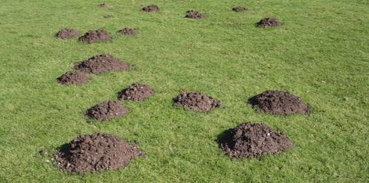 Does Your Yard Look Like This Use The Mole Buster To Get
