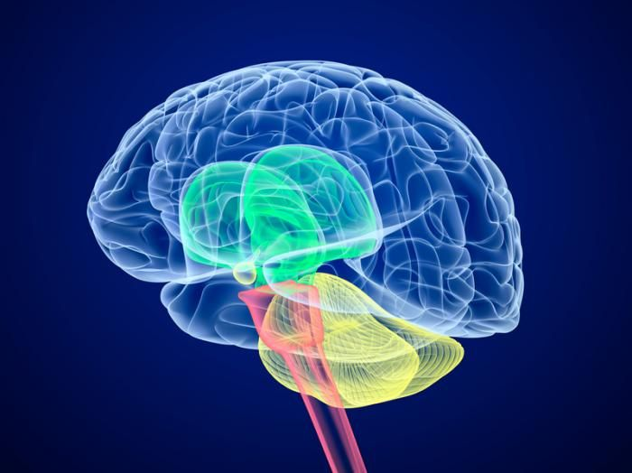 A new study explores the neuroanatomical basis of forgiveness and finds a brain area connected with the act of forgiving unintentional harm.