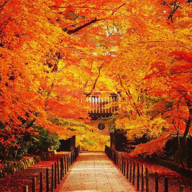 """定番から穴場まで!人生で一度は見たい""""秋の京都の絶景""""BEST10【2016】"""