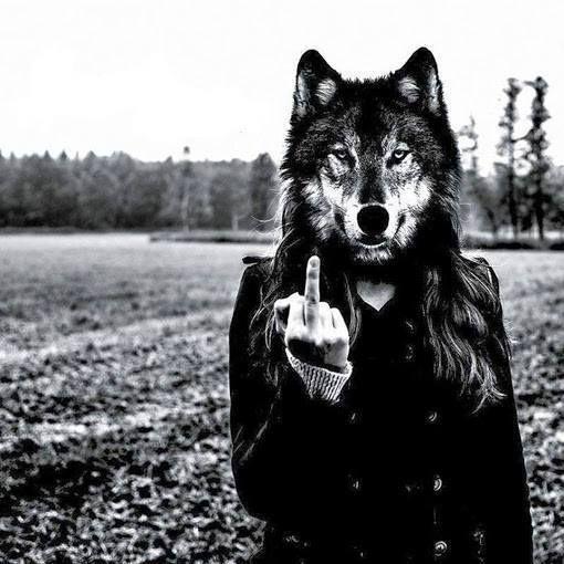 Tra il grigio delle pecore si celano i lupi, vale a dire quegli esseri che non hanno dimenticato che cos'è la libertà. E non soltanto questi lupi sono forti in se stessi, c'è anche il rischio che, un brutto giorno, essi trasmettano le loro qualità alla massa e che il gregge si trasformi in un branco. È questo l'incubo dei potenti.  Ernst Jünger - Trattato del ribelle, 1952