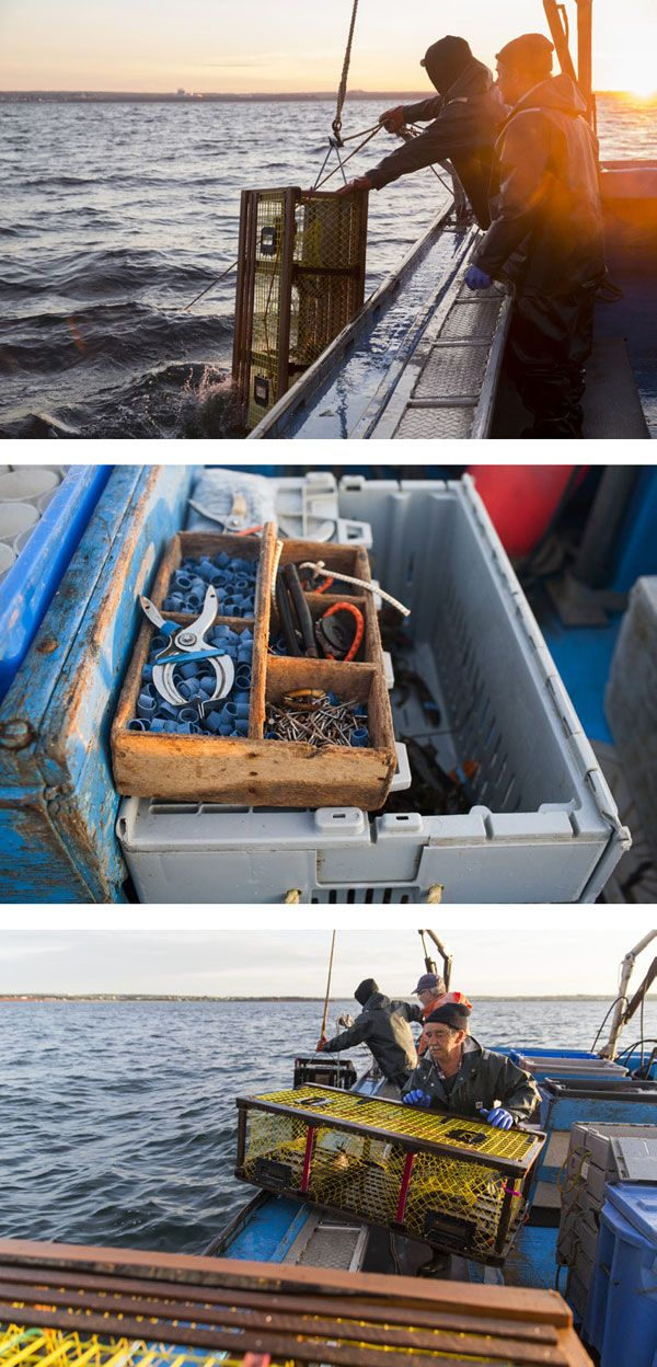 84 best my job images on pinterest lobsters new england for Fishing jobs in maine