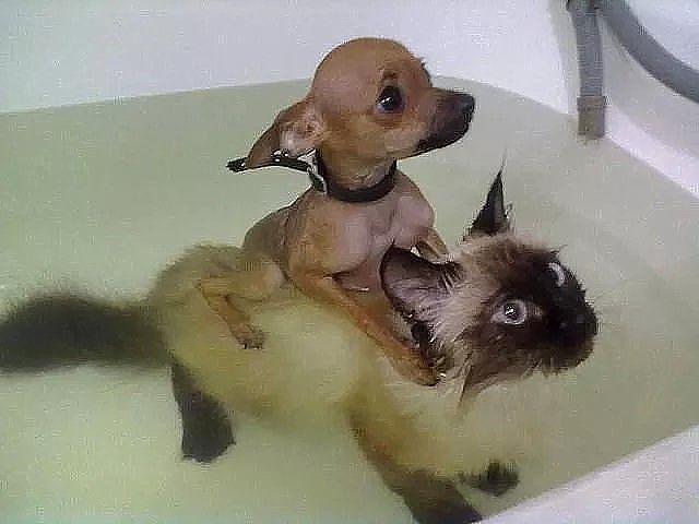 Je prends mon bain avec mon copain mais comme j'aime pas l'eau bien ont fait comme ça !