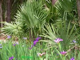 125 best treesplants oklahoma images on pinterest tree plantation 125 best treesplants oklahoma images on pinterest tree plantation tree planting and oklahoma publicscrutiny Image collections