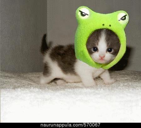 Kissanpentu (funny pics, hauskat kuvat, huumori kuvat)