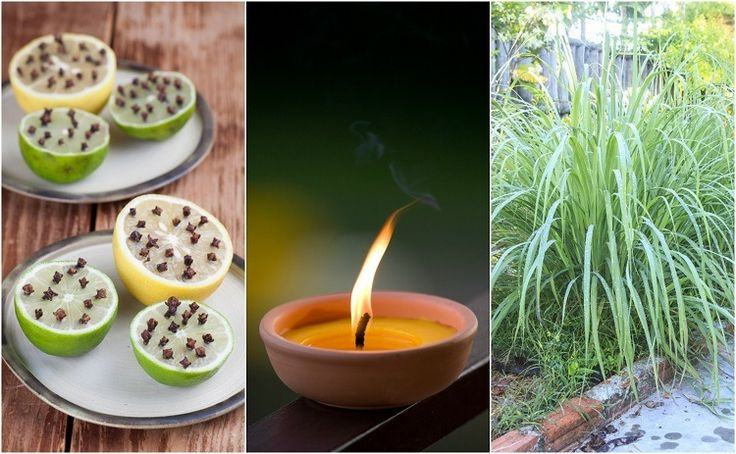 Flies are a highly annoying pest, but you don't have to put up with them! Here are fourteen genius natural tricks to keep them out of your home and garden.
