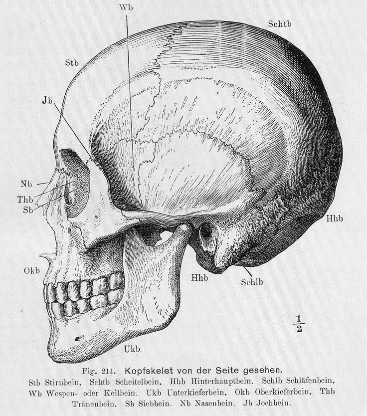 Atemberaubend Siebbeins Fotos - Anatomie Ideen - finotti.info