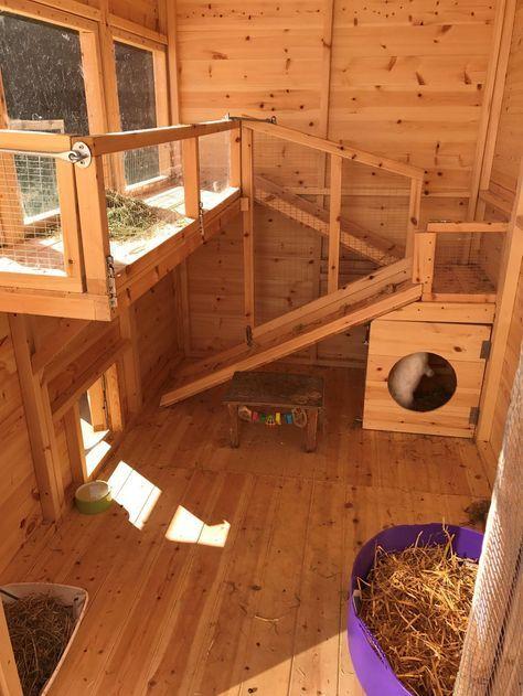 Pet Rabbit Care House