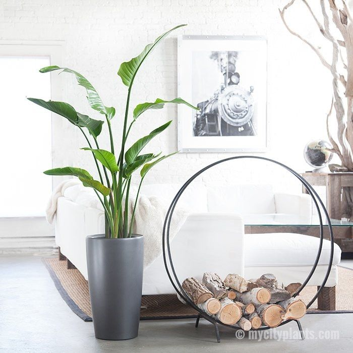 most recommended large indoor house plant