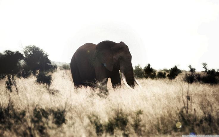 elephant wallpaperElephant Design Wallpaper