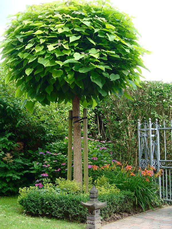 9 besten conny Bilder auf Pinterest | Blumengarten, Garten ideen und ...