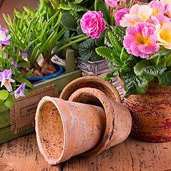 Die 25+ Besten Ideen Zu Exotische Zimmerpflanzen Auf Pinterest ... Tipps Umtopfen Zimmerpflanzen
