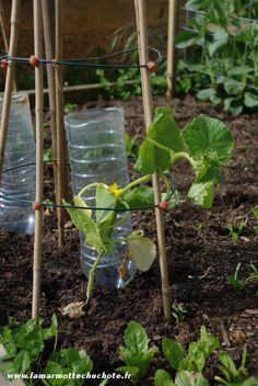 129 best images about conseils en jardinage on pinterest gardens raised beds and planters - Comment planter des poivrons ...