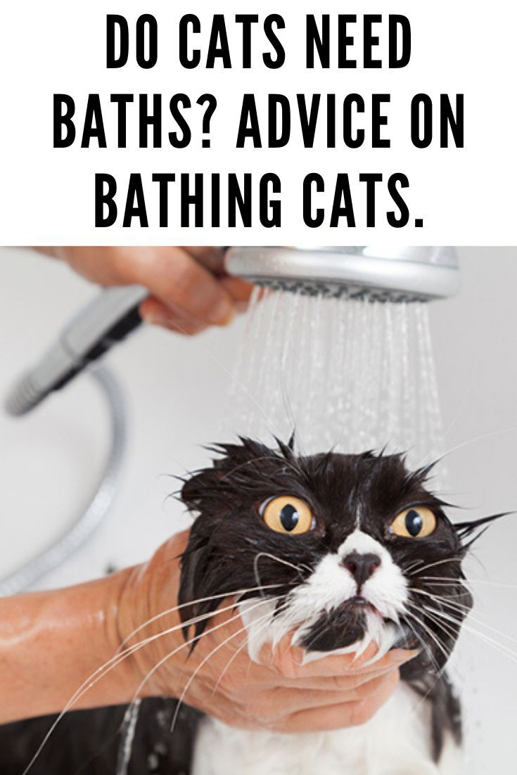 Do Cats Need Baths Advice On Bathing Cats Cats Cat Care Pretty Dogs