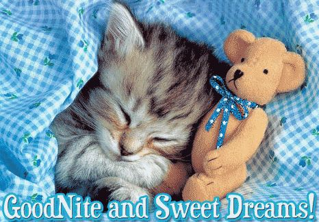 Goodnite Sweet Dreams quotes cute quote night kitten good night