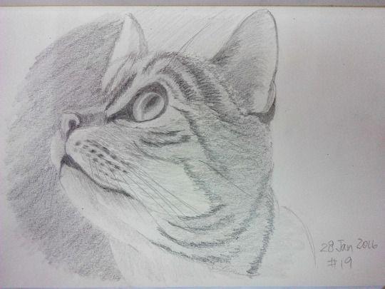 Cat sketching practice #019
