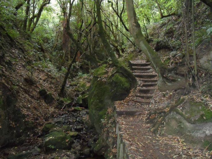 Manawatu Gorge-tranquil beautiful tramp!