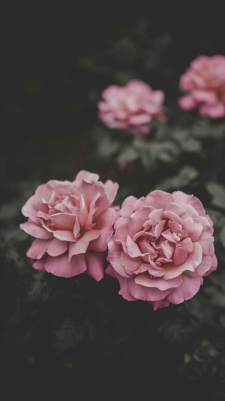 Pinterest Brittttx0 Wallpapers Flower Iphone Wallpaper