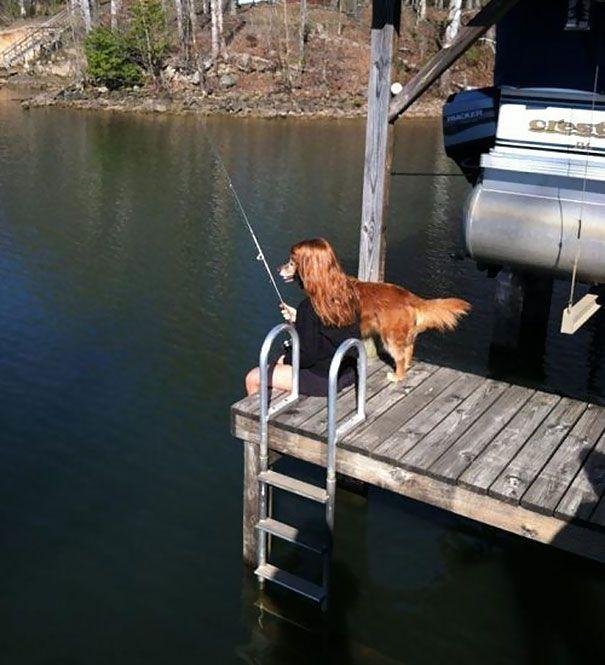 Golden 'Fish' Retriever