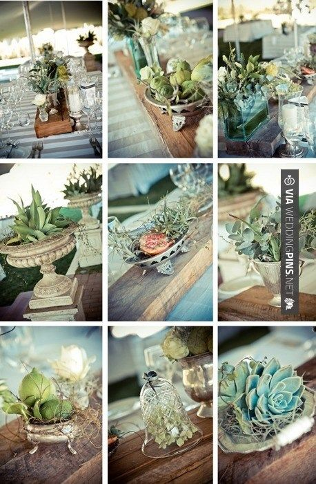 Brilliant! - succulent centerpiece | CHECK OUT MORE IDEAS AT WEDDINGPINS.NET | #weddings #travel #travelthemes #weddingplanning #coolideas #events #forweddings #weddingplaces #romance #beauty #planners #weddingdestinations #travelthemedweddings #romanticplaces #eventplanners #weddingdress #weddingcake #brides #grooms #weddinginvitations