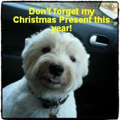 Your heard the dog!