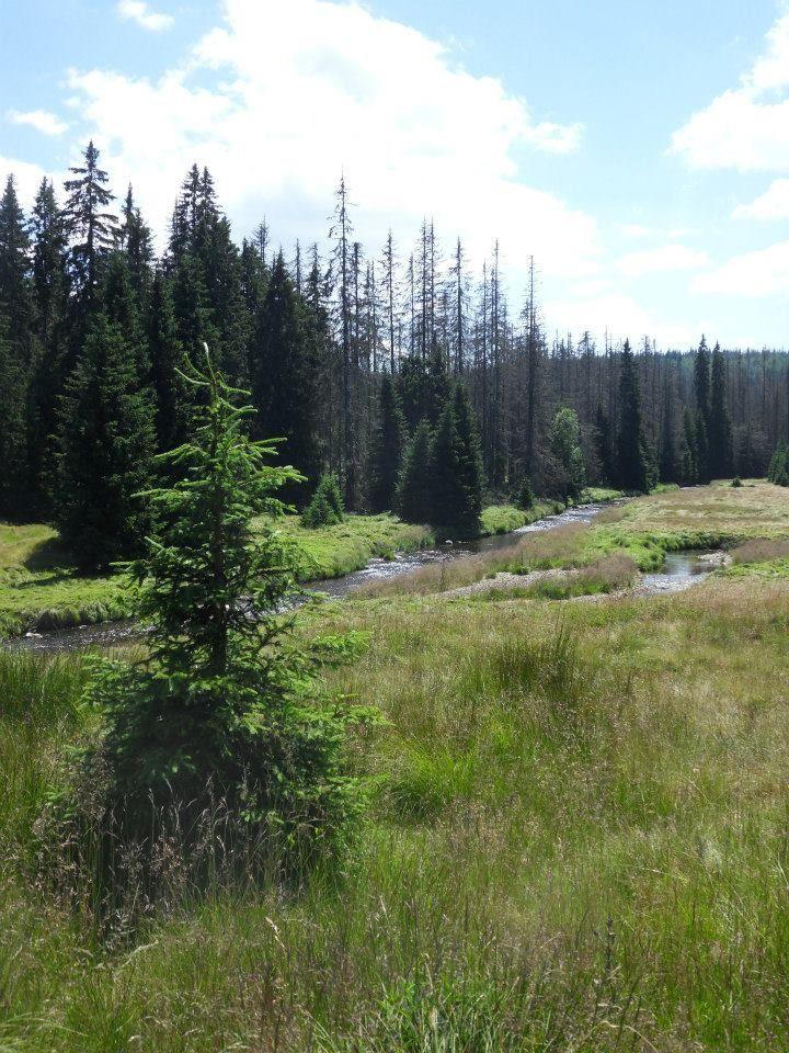 Šumava 2013