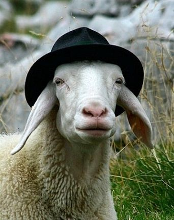 Is this Redundant? Sheep in  wool felt fedoras! The Fedora Hat Company http://www.thefedorahatcompany.com/