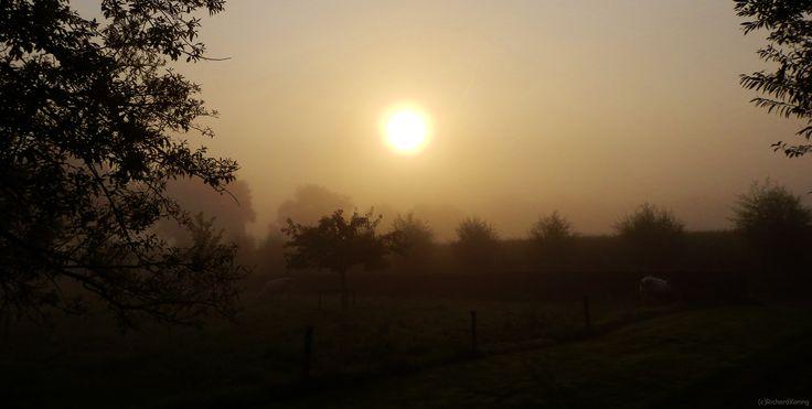 Bulls in the mist