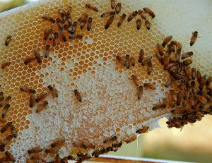 8 winter activities for beekeepers 636386698_2a01b163fa_z