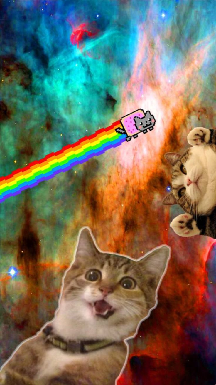 Cats In Space Wallpaper P