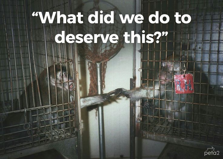 Monkeys are in labs being tested. They never had a choice in life, but you have the choice to take action and help them.
