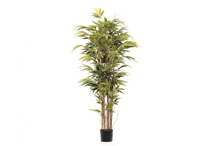Bamboo Nitilda Tree | Super Amart