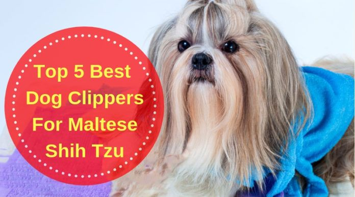 Top 5 Best Dog Clippers For Maltese Shih Tzu In 2020 Dog