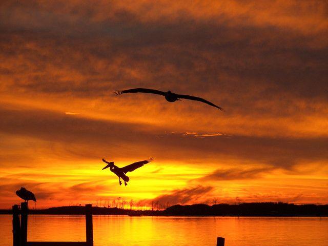 Orange sky: Orange Sky, Birds