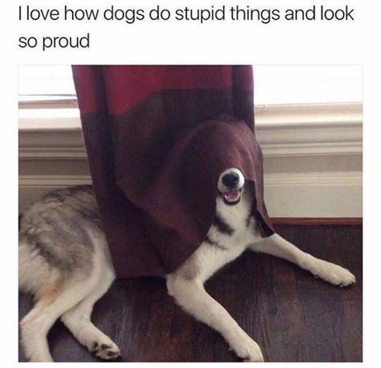 funny dog hiding games #DogAndPuppies