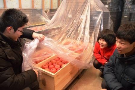 グローバルGAPに基づきカバーを掛けて保管するリンゴを確認する生徒(青森県五所川原市で)