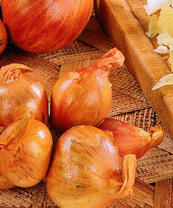 Gul Schalottenlök 'Golden Gourmet'® | Frukt & grönt | Bakker Holland